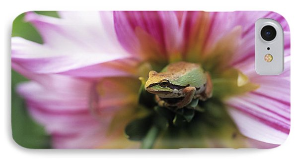Pacific Treefrog On A Dahlia Flower IPhone Case by David Nunuk