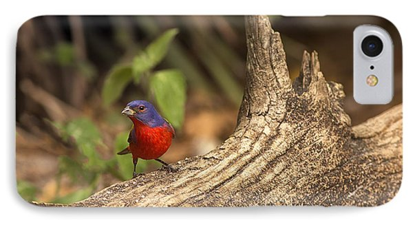 IPhone Case featuring the photograph Painted Bunting On Log by Anne Rodkin
