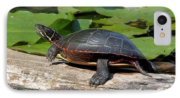 Painted Turtle On Log IPhone Case by Doris Potter