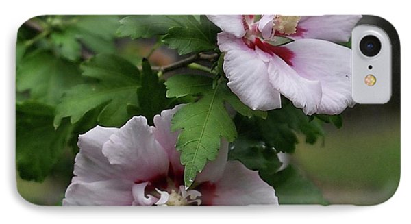Pair Of Rose Of Sharon IPhone Case by Rick Friedle