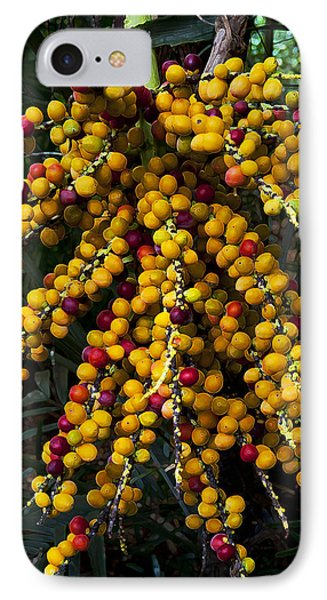 IPhone Case featuring the photograph Palm Seeds Baroque by Steven Sparks