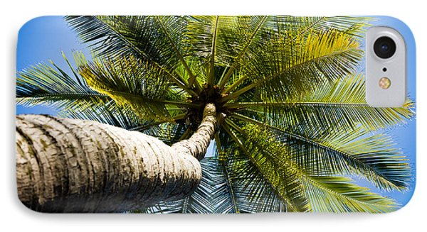 Palm Tree From Below IPhone Case by Anthony Doudt