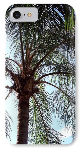 Palm Tree  IPhone Case by Rebecca Overton