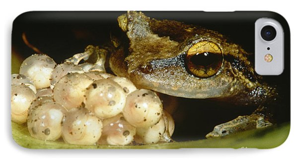 Parental Care By Tree Frog Phone Case by Dante Fenolio