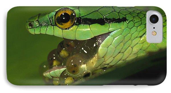 Parrot Snake Eating Tree Frog Eggs Phone Case by Christian Ziegler