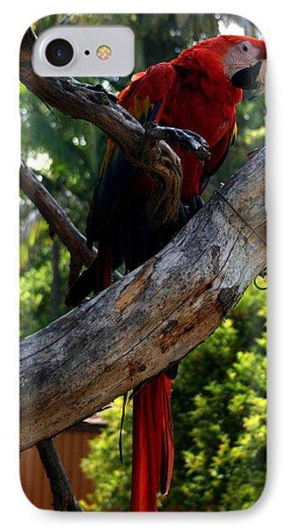 Parrot2 IPhone Case by Karen Harrison