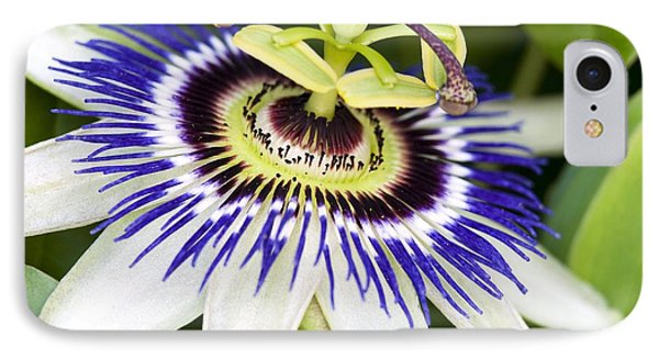 Passion Flower (passiflora Caerulea) Phone Case by Adrian Bicker
