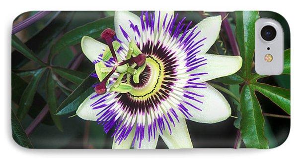 Passion Flower (passiflora Sp.) Phone Case by Kaj R. Svensson