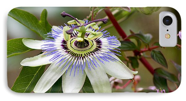 Passion Flower IPhone Case by Teresa Zieba