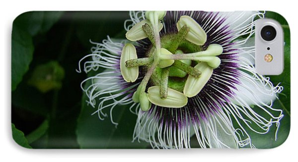 Passion Fruit Flower Phone Case by Mary Deal