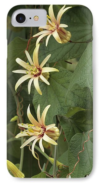 Passionflower Phone Case by Archie Young