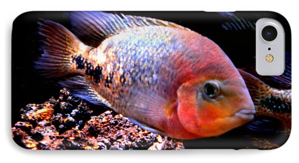 Peacefull Fish Swim  Around  In Denmark Phone Case by Colette V Hera  Guggenheim