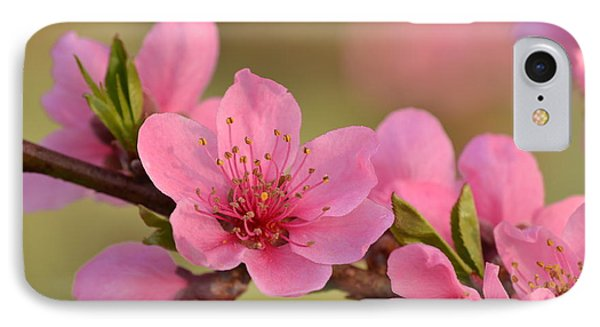 Peach Beautiful IPhone Case by JD Grimes