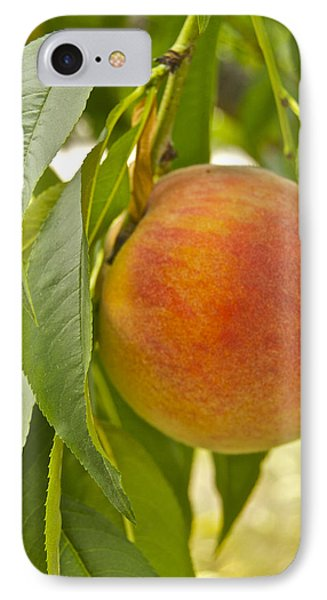Peachy 2903 Phone Case by Michael Peychich