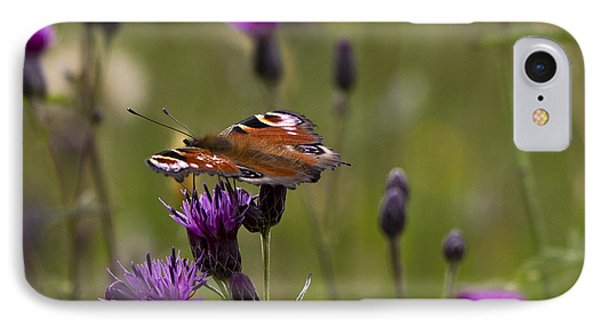 Peacock Butterfly On Knapweed IPhone Case