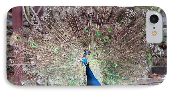 Peacock Display Phone Case by Kenneth Albin