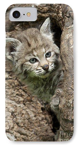 Peeking Out - Bobcat Kitten IPhone Case