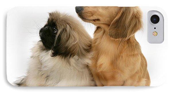 Pekingese And Dachshund Puppies IPhone Case by Jane Burton