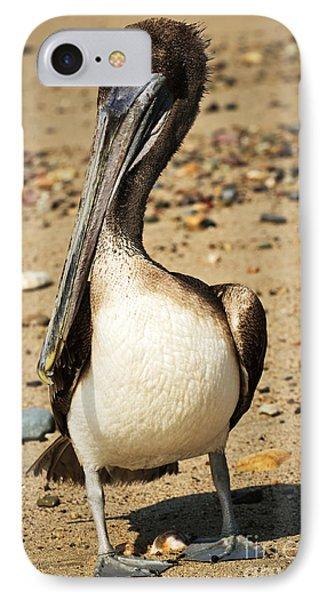 Pelican On Beach In Mexico IPhone Case by Elena Elisseeva