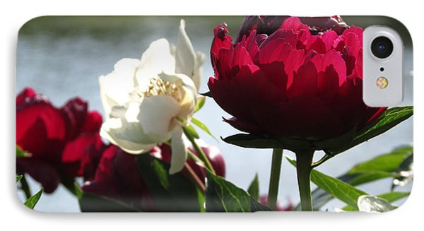 Peony Sunlit IPhone Case by Rebecca Overton