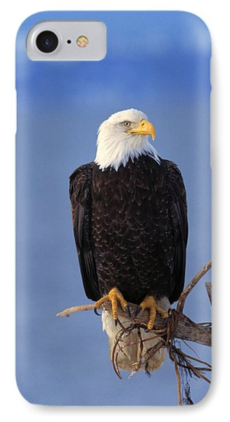 Perched Bald Eagle Phone Case by Natural Selection David Ponton