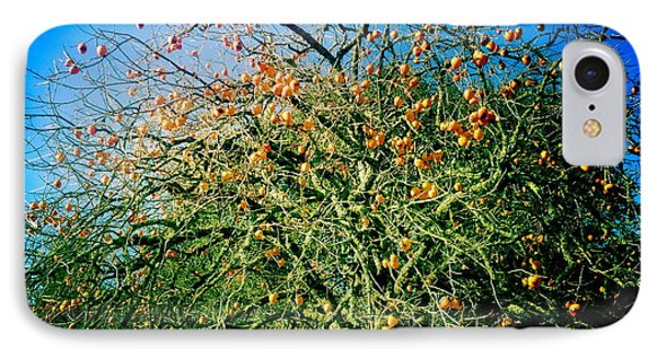 Persimmon Tree IPhone Case by Suzanne Lorenz