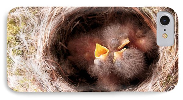 Phoebe Babies In Nest Phone Case by Angie Rea