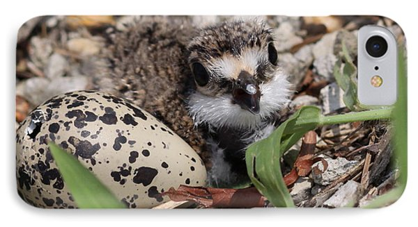 Killdeer Baby - Photo 25 IPhone Case