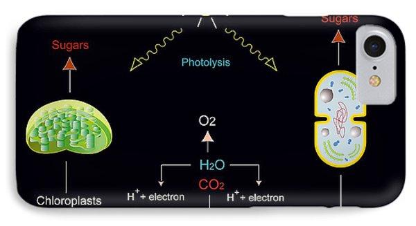 Photosynthesis, Artwork Phone Case by Francis Leroy, Biocosmos