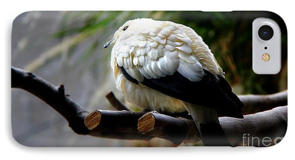 IPhone Case featuring the photograph Pied Imperial Pigeon by Davandra Cribbie