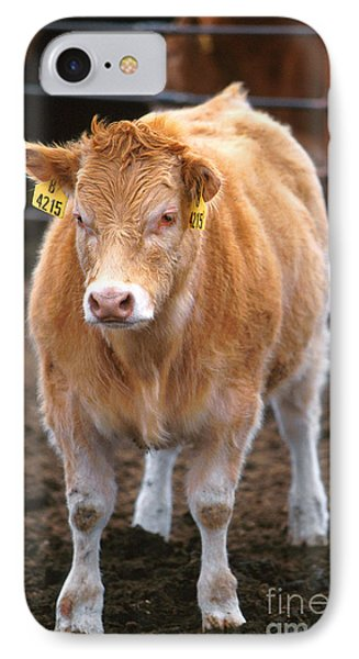 Piedmontese-hereford Crossbred Calf Phone Case by Science Source