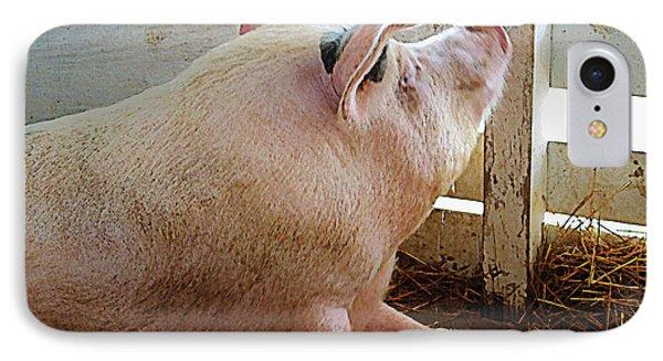 Pig Enjoying The Sun Phone Case by Susan Savad