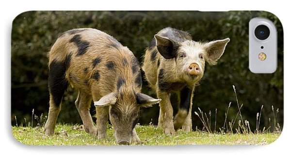 Piglets Foraging In Woodland Phone Case by Bob Gibbons