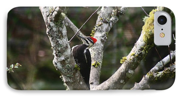 IPhone Case featuring the photograph Pileated Woodpecker In Cherry Tree by Kym Backland