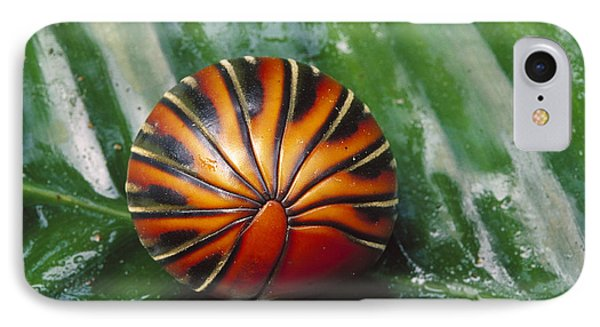Pill Millipede Glomeris Sp Rolled Phone Case by Cyril Ruoso