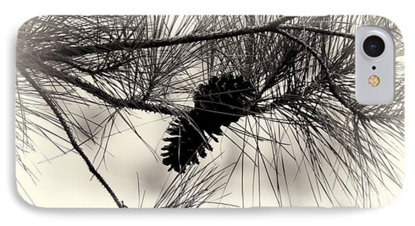 Pine Cones In The Treetops Phone Case by Douglas Barnard