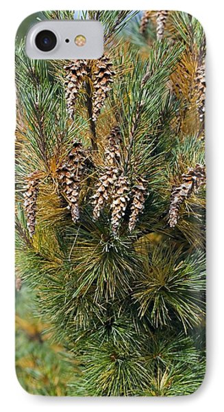 Pine (pinus Sp.) Phone Case by Dr Keith Wheeler