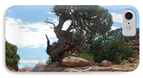 Pine Tree By The Canyon IPhone Case by Dany Lison