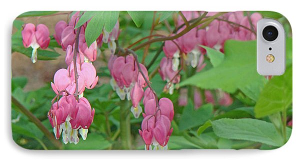 Pink Bleeding Heart Flowers - Dicentra Spectabilis Phone Case by Mother Nature