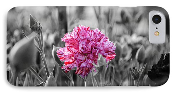 Pink Carnation IPhone Case by Sumit Mehndiratta