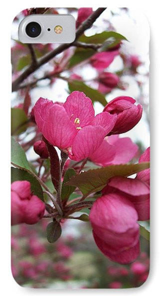 Pink Crabapple Blooms IPhone Case by Rebecca Overton
