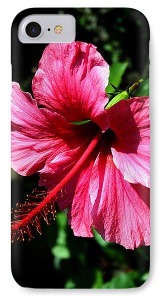Pink Hibiscus2 IPhone Case by Karen Harrison