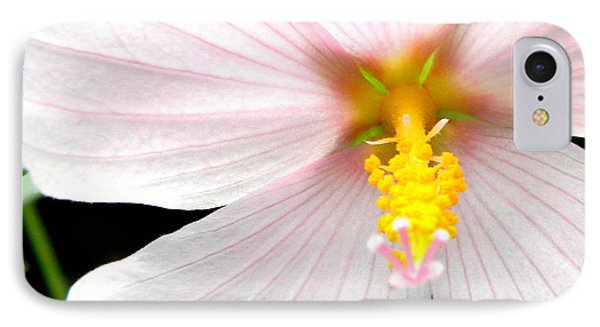 IPhone Case featuring the photograph Pink Hybiscus by Jodi Terracina