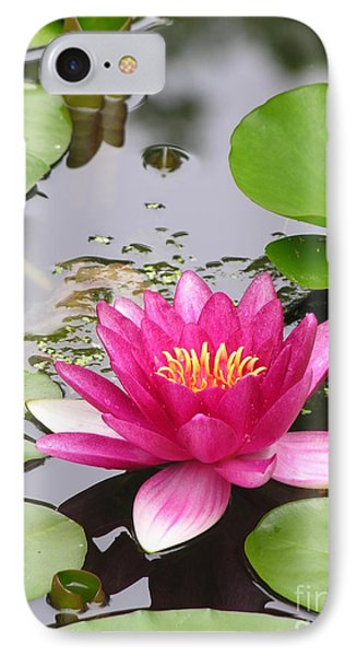 Pink Lily Flower  IPhone Case by Diane Greco-Lesser