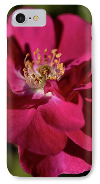 IPhone Case featuring the photograph Pink Of Rose by Joy Watson
