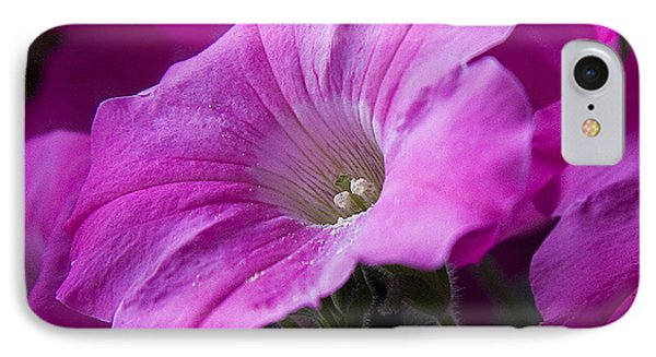 Pink Petunia II IPhone Case