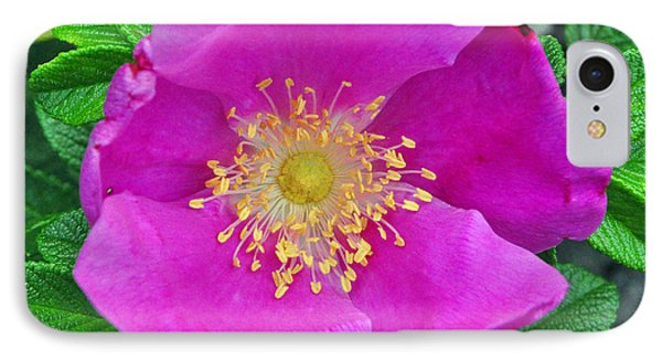 IPhone Case featuring the photograph Pink Portulaca by Tikvah's Hope
