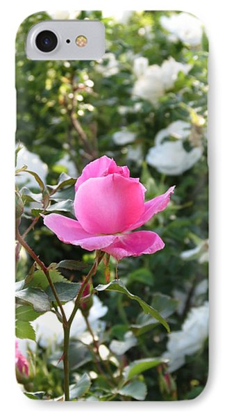 Pink Rose  IPhone Case by Rebecca Overton