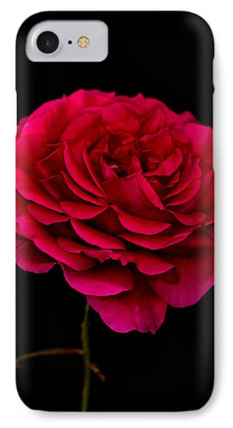 IPhone Case featuring the photograph Pink Rose by Steve Purnell