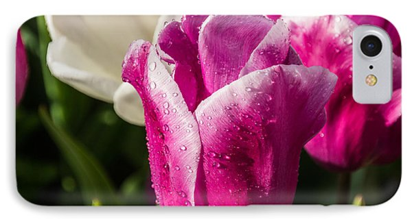 IPhone Case featuring the photograph Pink Tulip by David Gleeson
